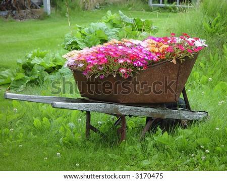 Wheelbarrow filled with flowers as garden decoration in Skagway, Alaska - stock photo