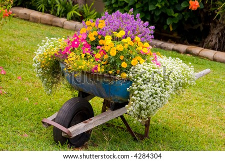 Wheelbarrow full of colorful flowers on a grass lawn - stock photo
