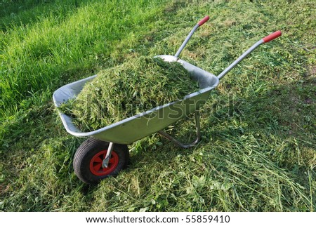 wheelbarrow on a lawn with fresh grass clippings in summer - stock photo