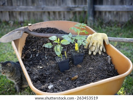 Wheelbarrow with compost, organic sprouts and gardening tools - stock photo