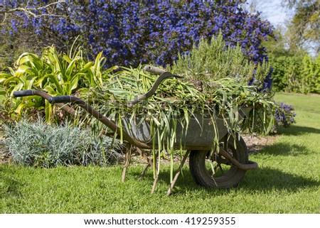 Wheelbarrow with pests parasite grass. gardening France - stock photo