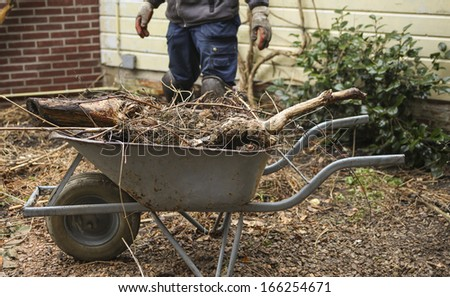 Wheelbarrow with pruned plants and branches in garden - stock photo