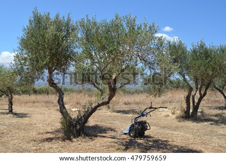 Wheeled trimmer in Olive Grove
