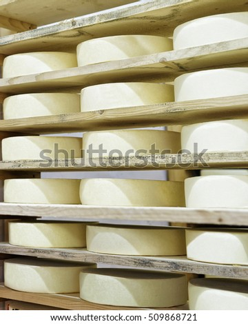 Wheels of young Cheese on wooden shelves at maturing cellar of Franche Comte dairy in France