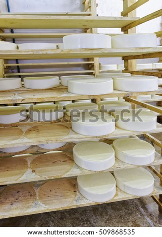 Wheels of young Cheese on wooden shelves at ripening cellar of Franche Comte dairy in France