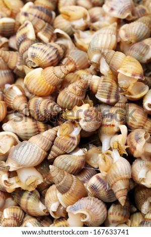 Whelks background  - stock photo