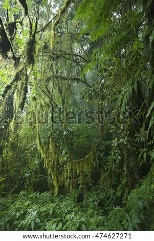 When the falling rain in the green forest make a fog fill mood background  on the