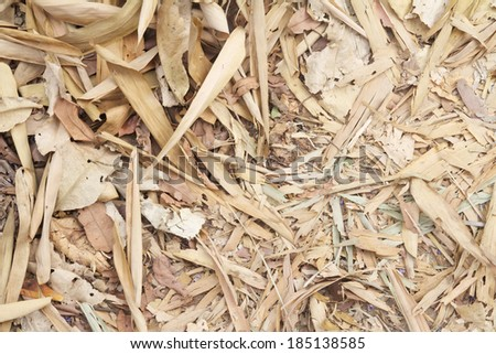 When the wind blows through the leaves drop - stock photo