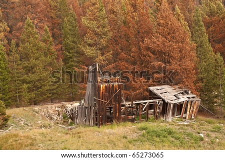 Which will come first for this long-abandoned building?  Fire from the beetle-killed pines or full collapse from vandals and weather? - stock photo