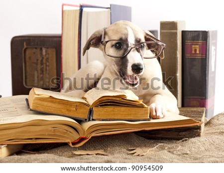 Whippet  puppy and retro book - stock photo