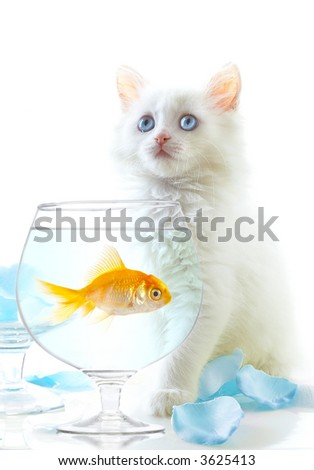 White a kitten and a gold small fish. - stock photo