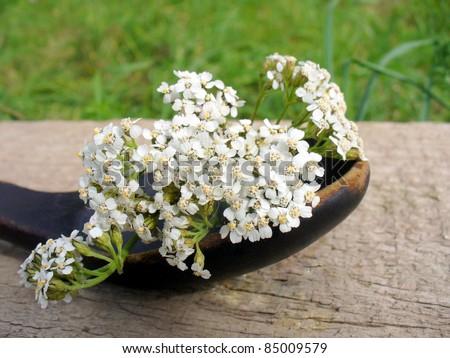 white Achillea Millefolium  in a spoon - stock photo