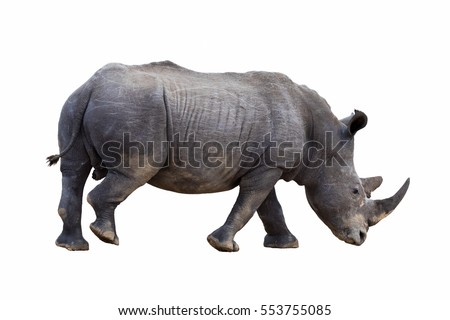 White african rhinoceros cut out and isolated on white background. Side view.