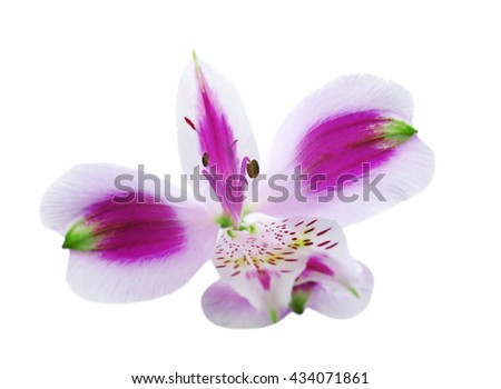 White alstroemeria flower on white background stock photo royalty white alstroemeria flower on white background mightylinksfo Gallery