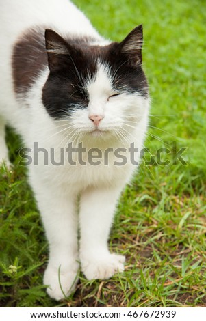 White and black domestic cat in the garden