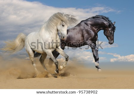 White and black horses galloping in desert - stock photo