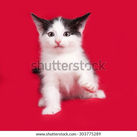 White and black kitten playing on red background