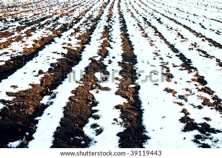 white and black rows of field. winter