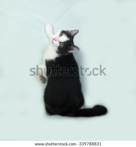 White and black spotted kitten sitting on green background