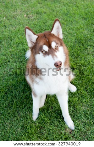 white and brown dog sitting on green field