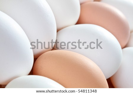 White and brown essgs close up - stock photo