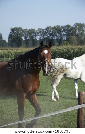 white and brown horses on the belt