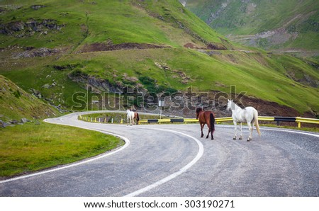White and brown horses walking on Transfagarasan highway in Romania - stock photo