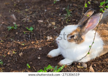 White and brown rabbit sitting under the tree