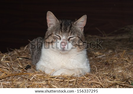 White and gray cat lying in the straw - stock photo