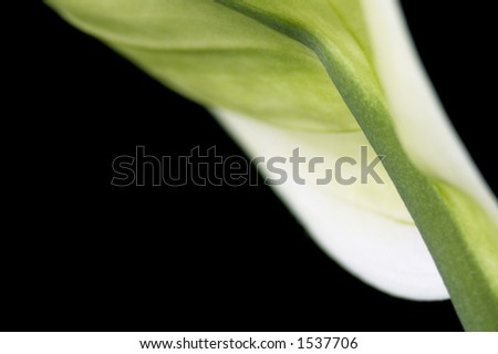 white and green leaf. detail - stock photo