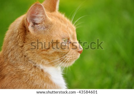 White and orange cat against a green background - stock photo