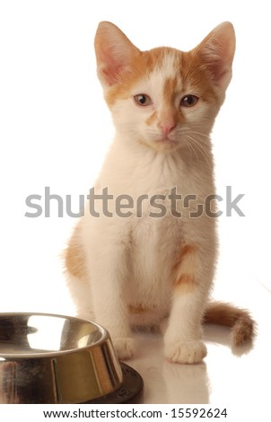 white and orange kitten sitting beside an empty bowl of food - stock photo