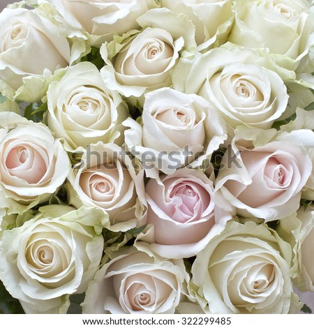 White and Pale Pink Roses as a background - stock photo