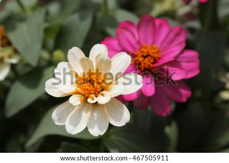 white and pink flower at home