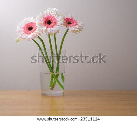 White and pink gerber daisies in a glass vase. Interior design detail. - stock photo