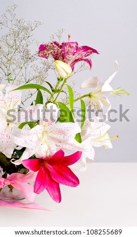 white and pink lily flowers background