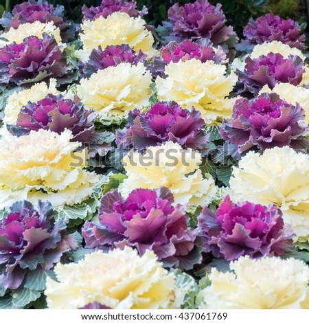 white and purple flowers in plot - stock photo