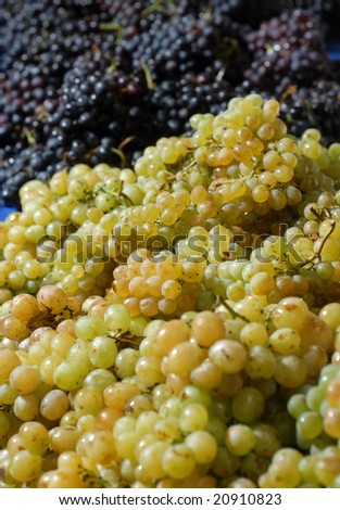 white and red grape - stock photo