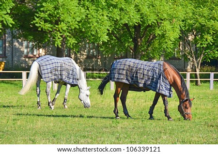 White and red horse in pasture near stable - stock photo