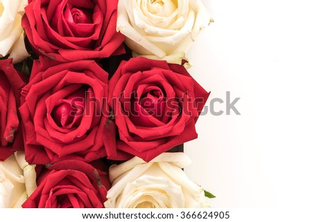 white and red rose on white background