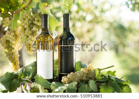 White and red wine bottle, young vine and bunch of grapes against green shining bokeh background, Italy