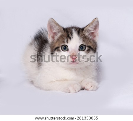 White and striped kitten lying on gray background - stock photo