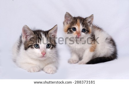 White and striped kitten lying on gray background