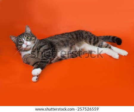 White and striped spotted cat lying on orange background - stock photo