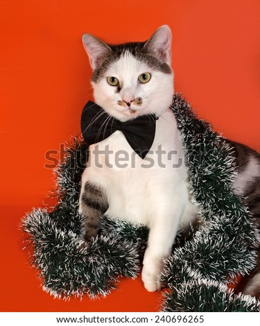 White and tabby cat in bow tie and Christmas tinsel sitting on orange background