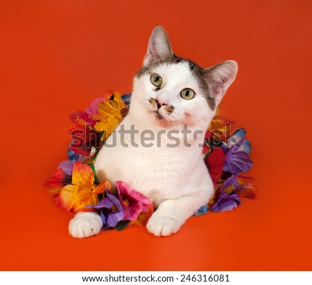 White and tabby cat wrapped Christmas tinsel lying on orange background - stock photo