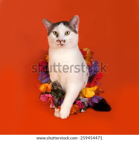 White and tabby cat wrapped Christmas tinsel sitting on orange background - stock photo