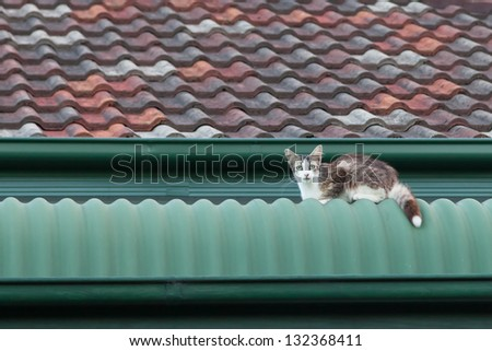White and tabby stray cat sitting on a green and tile roof