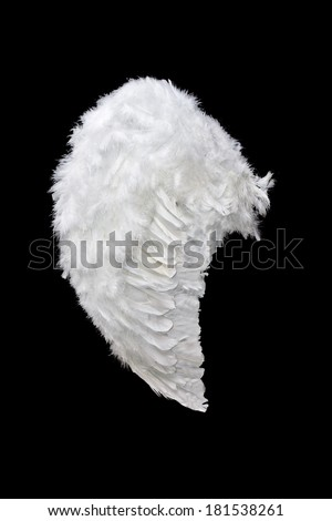 White angel wing isolated on black background - stock photo
