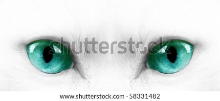 White angora cat with green eyes - stock photo